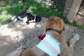 Buddy enjoys the yard and his kitty friend - his red doll is close by.